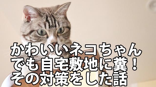 ネコの糞被害対策の話